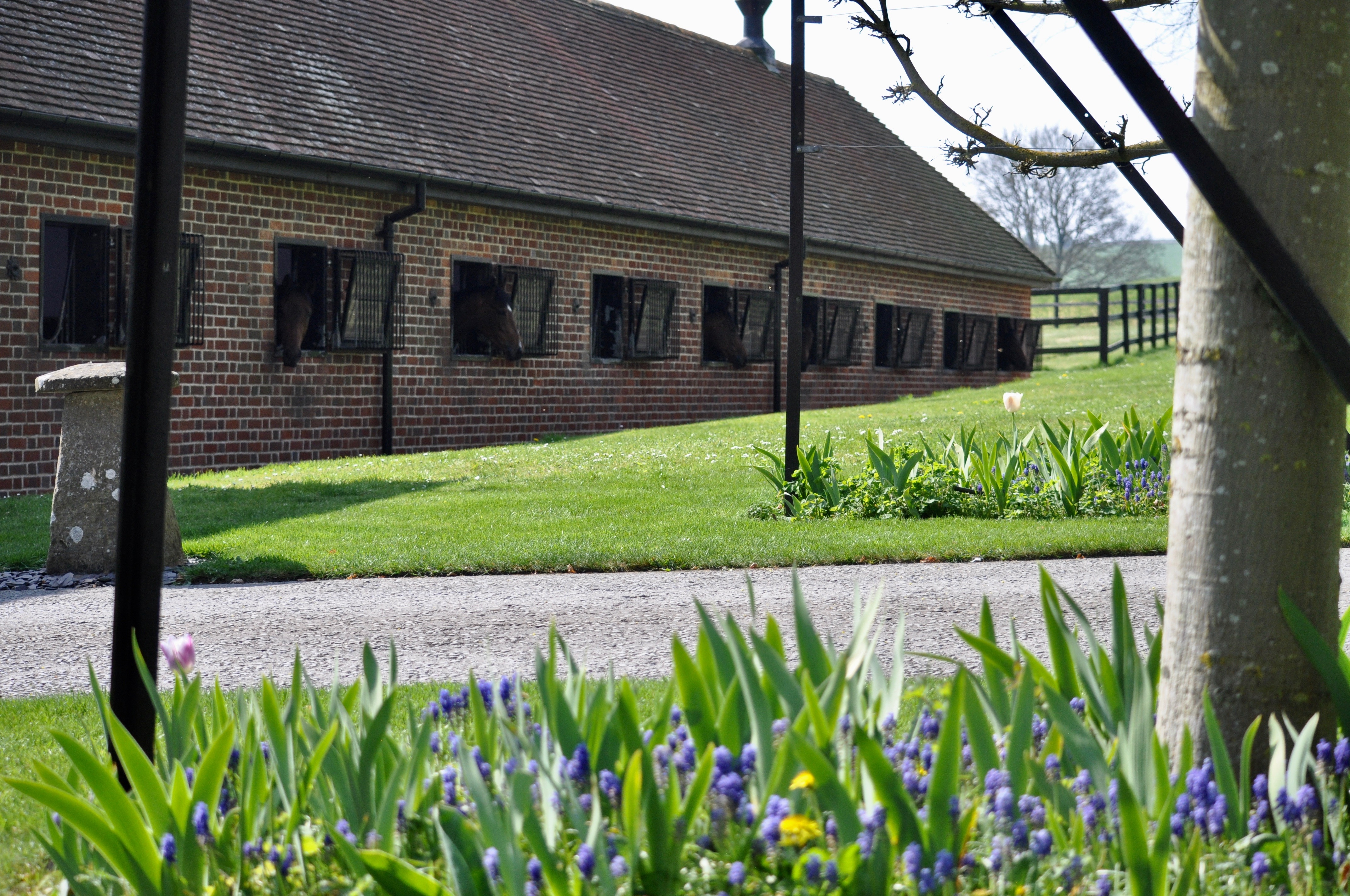 Ed Walker Stable Tour